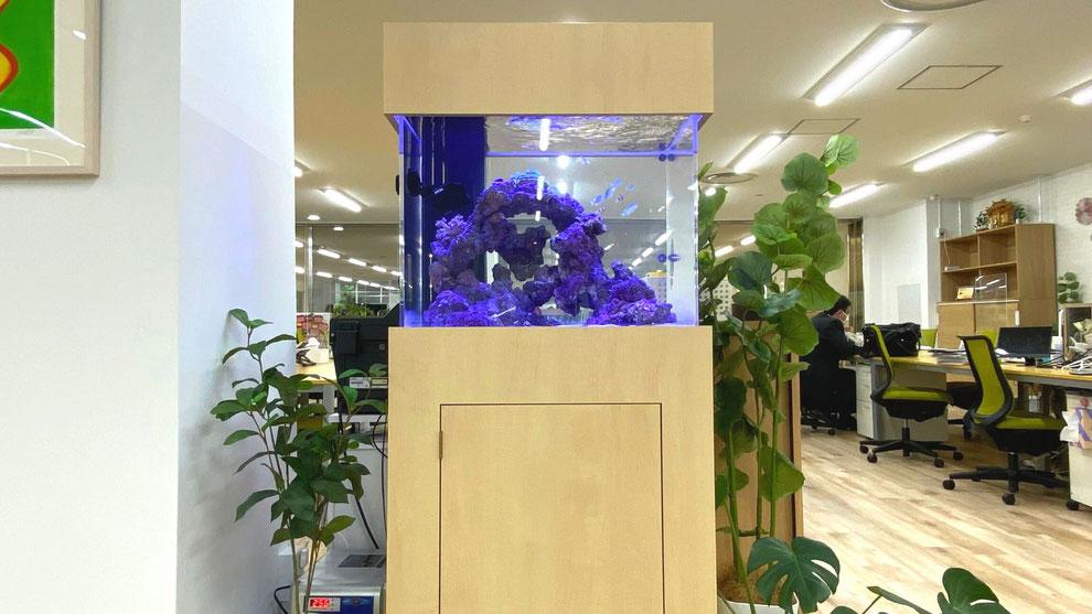 海水魚飼育方法の説明