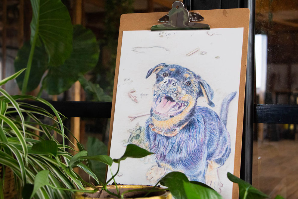Illustratie in kleur, voornamelijk blauw en paars, van een hond, een Rottweiler. Getekend met potlood. Op de voorgrond enkele planten out of focus.