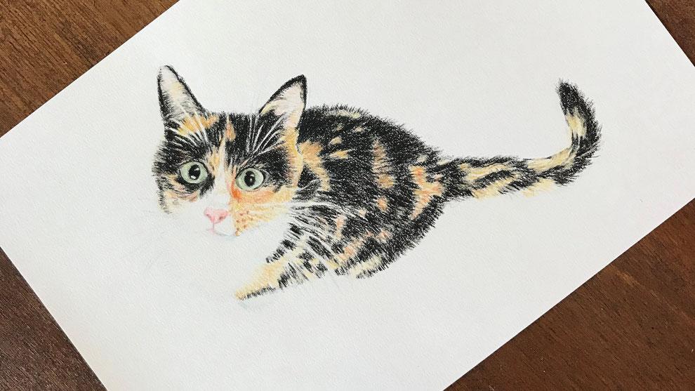 Illustratie in kleur van een kat die naar boven kijkt.