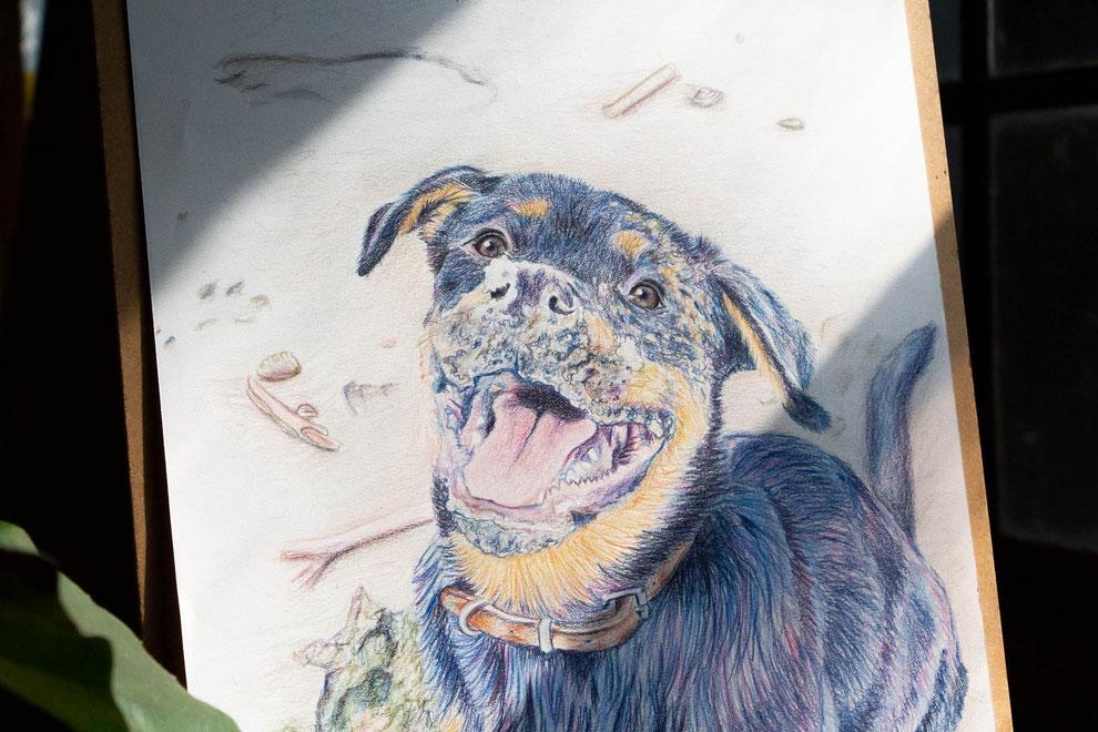 Getekend portret van een hond in blauw en paarse kleuren. Er valt een straal zonlicht op het papier.