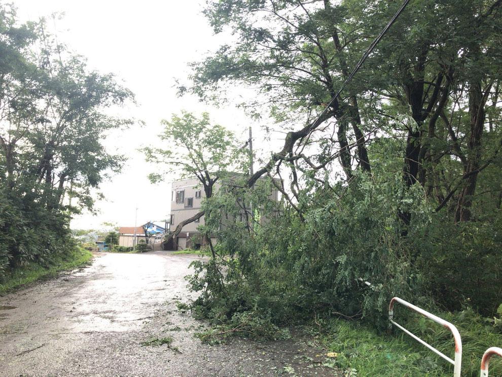 株式会社住設周辺の道路 倒木の写真