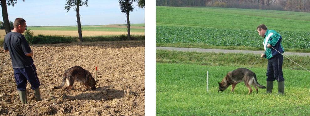 Der Ansatz auf brauen und bewachsenen Ackerboden
