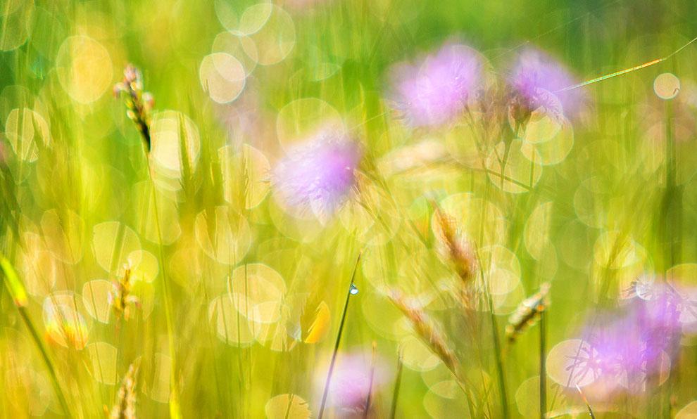 Flower Field - Oudemolensche Diep ©JurjenVeerman