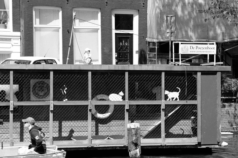 Das Katzen-Hausboot in Amsterdam