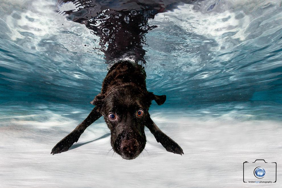 Bild: Hund Unterwasser Labrador unter Wasser Berlin München Köln Hamburg Frankfurt