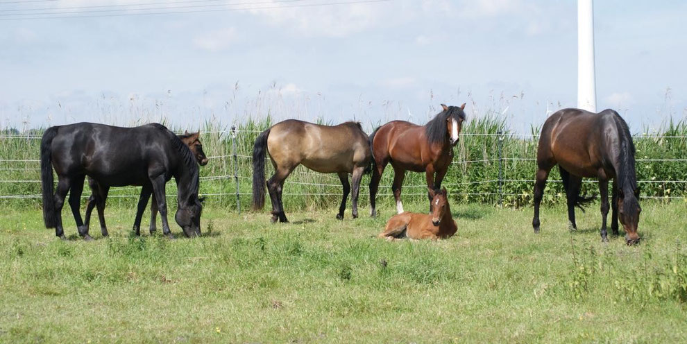 Black, Brown, Buckskin, Bay, Bay & Bay(sooty)