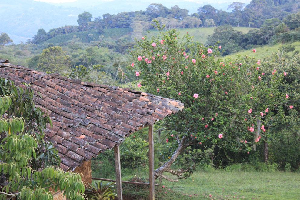 Ausflug nach San Agustin in den Süden Kolumbiens mit KOLUMBIENline