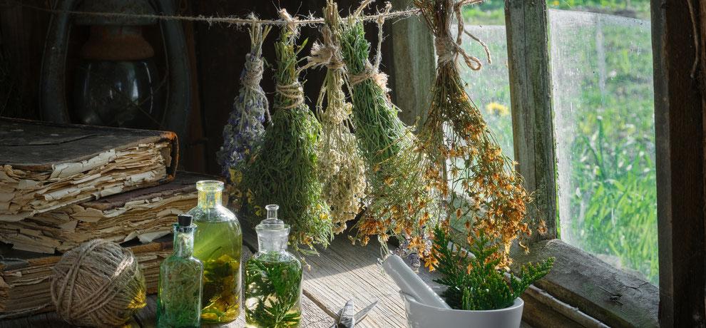 blog over de fabels en feiten over belladonna nachtschade en de kruiden die claire fraser gebruikte als medicijn in Outlander