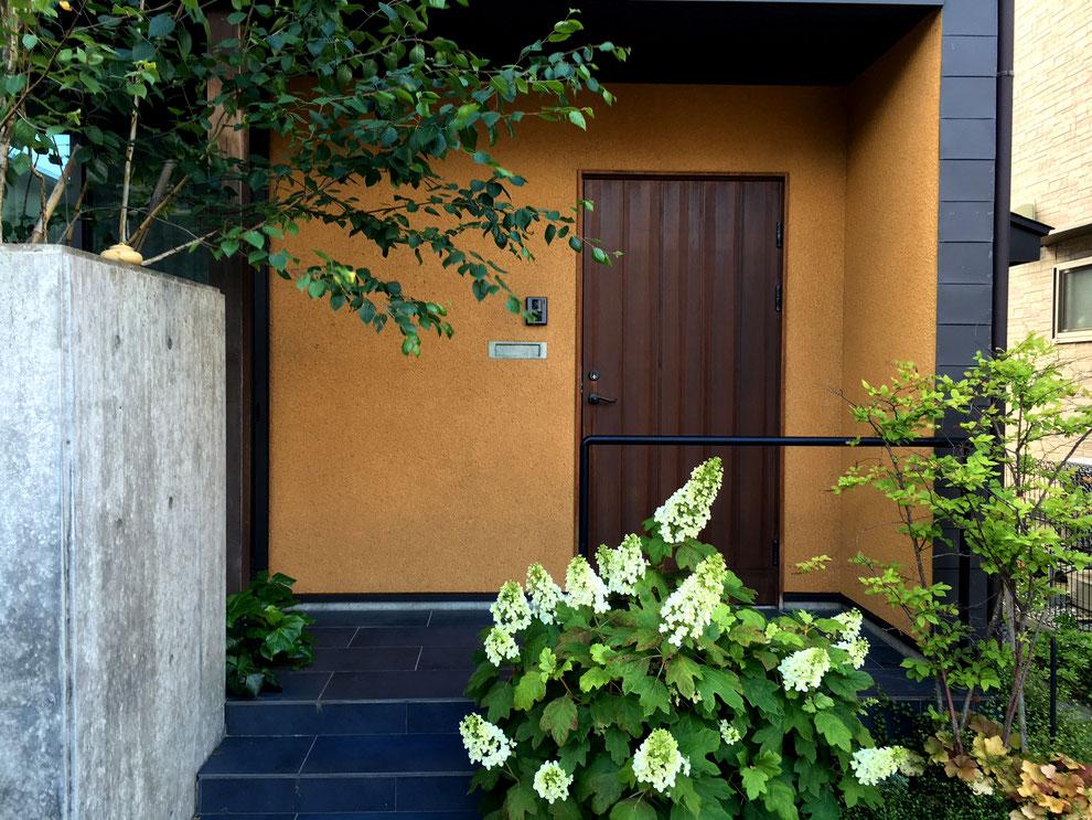 自宅の玄関ポーチ 柏葉アジサイと白樺のゲート