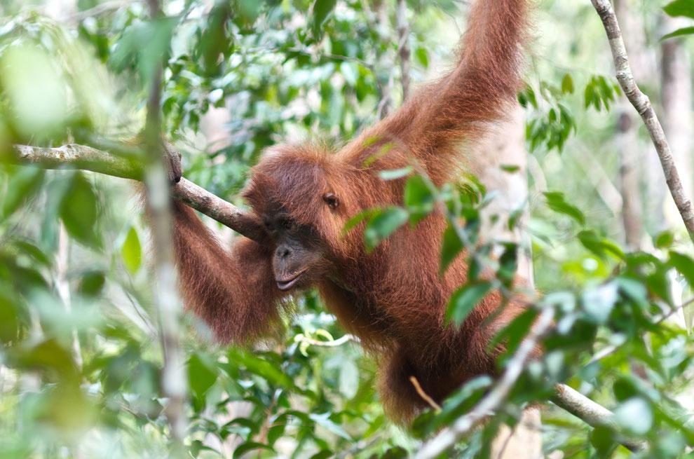 Borneo, Indonesien, 2013