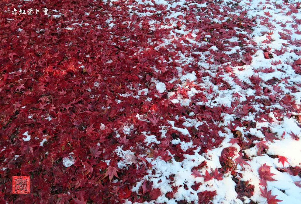 赤紅葉と雪