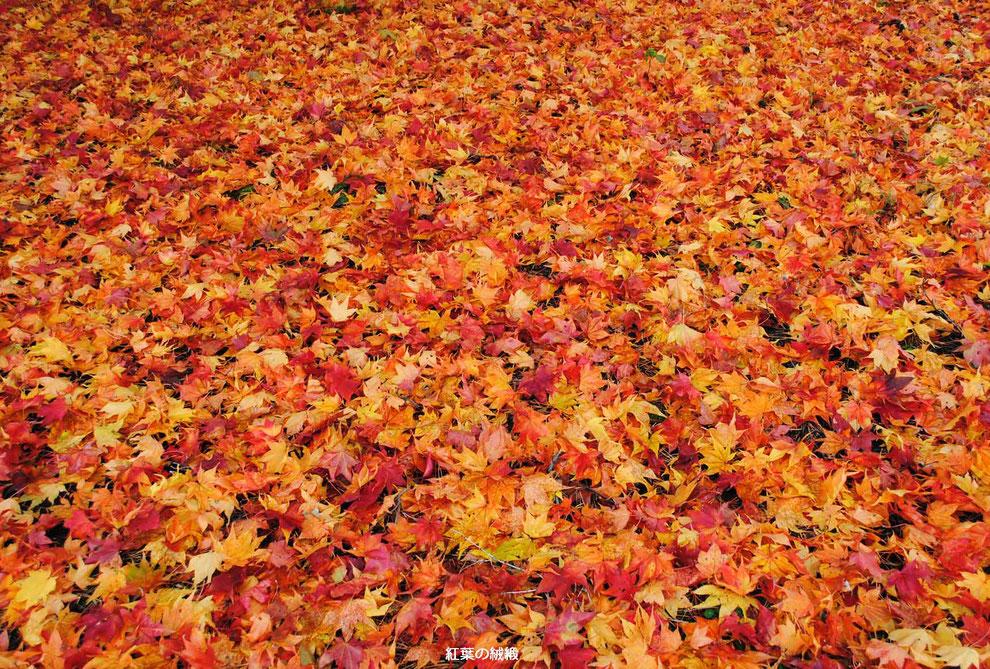 紅葉の絨緞