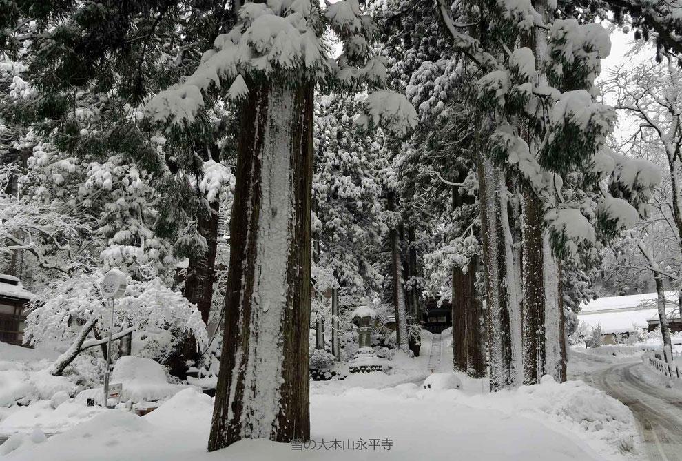 雪の大本山永平寺-5