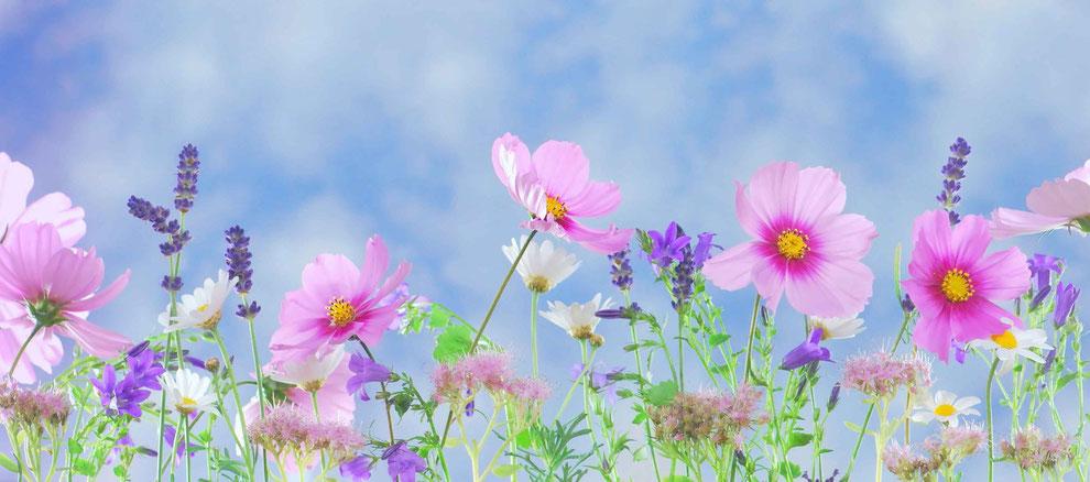 Wunderschöne Wisenblumen im Sommer