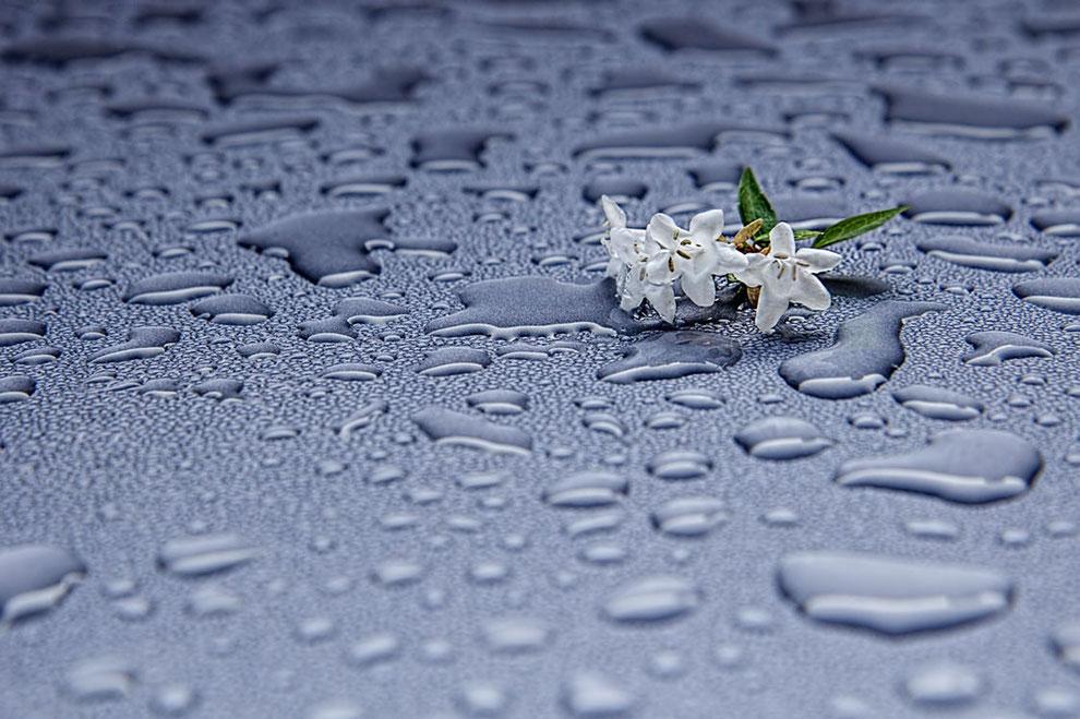 Zarte, weisse Blüten liegen auf einer Glasscheibe mit zahlreichen Wassertropfen.