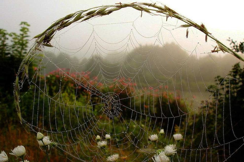 Wunderschöne Spinnwebe mit Tautropfen in der Natur