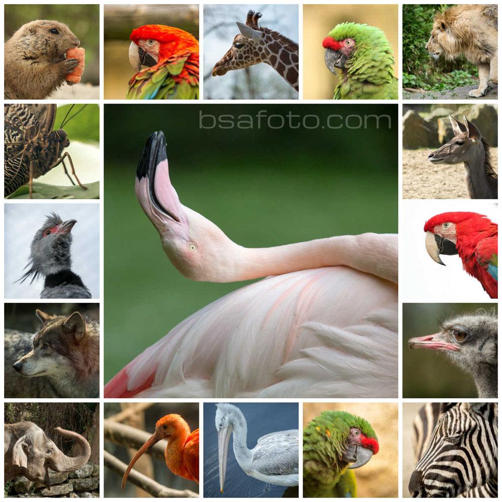 lijdorp, dieren, Diergaarde Blijdorp, foto, fotografie, rotterdam, struisvogel, zoo ... Tags: aap, dieren, Diergaarde Blijdorp, foto, fotografie, groen blaadje, rotterdam,