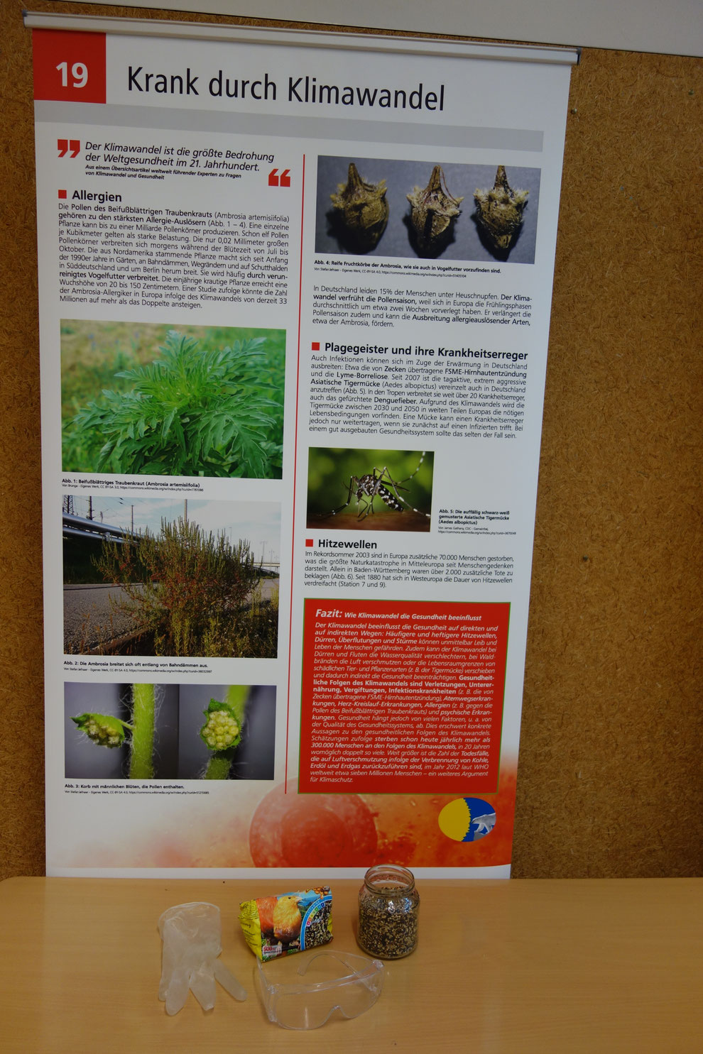 Die allergieauslösenden Ambrosiasamen werden auch durch Vogelfutter verbreitet. Der Klimawandel schafft der Ambosiapflanze zunehmend auch bei uns Lebensraum.