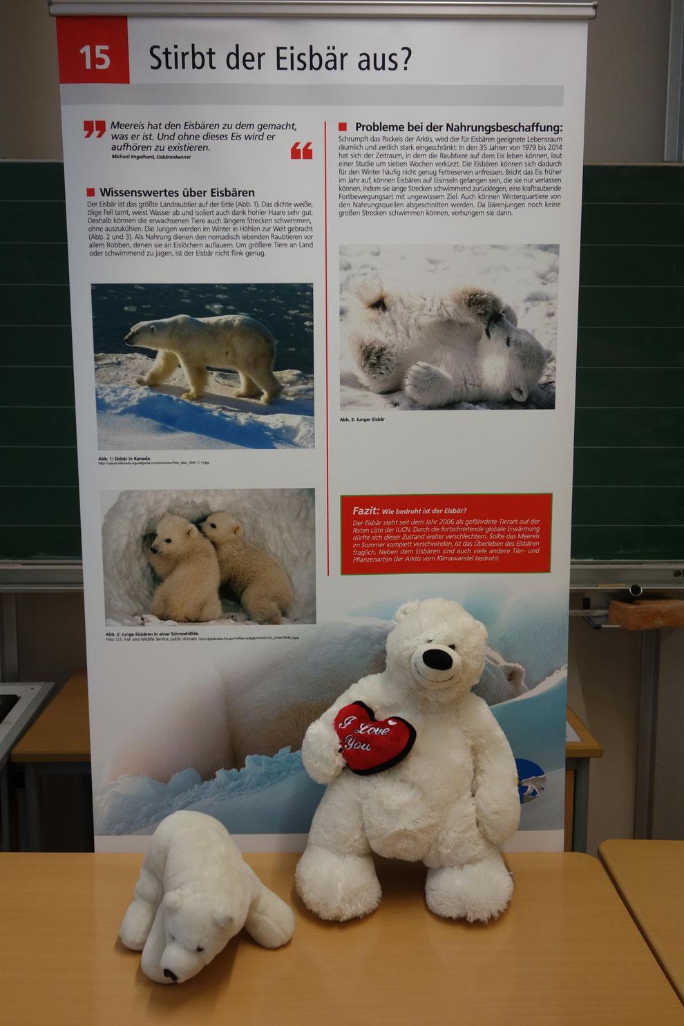 Eisbären sind Sympathieträger für den Klimaschutz, ihr Lebensraum ist durch den Klimawandel bedroht.