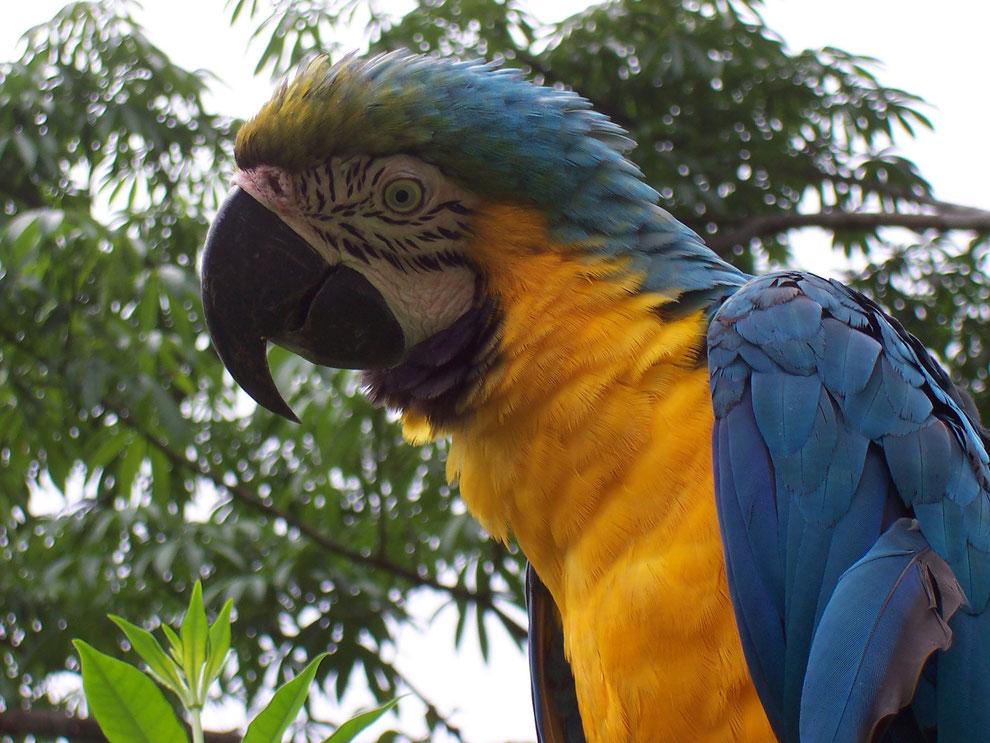 Flora und Fauna im Regenwald in Peru mit PERUline entdecken