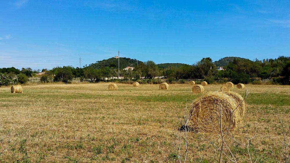 In der Zentralebene wird noch intensiv Landwirtschaft betrieben.