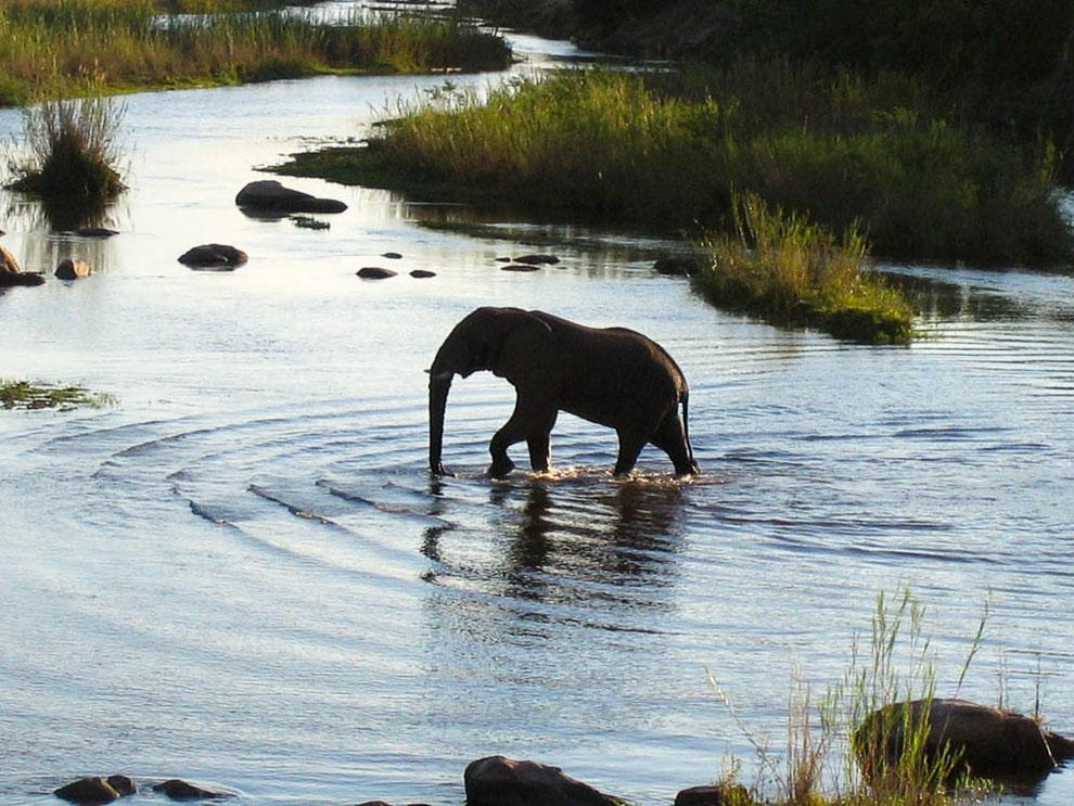 Feierabend. Ich liebe dieses Foto :-) - mit dem einsamen Elefanten, der im Abendlicht seiner Wege zieht.