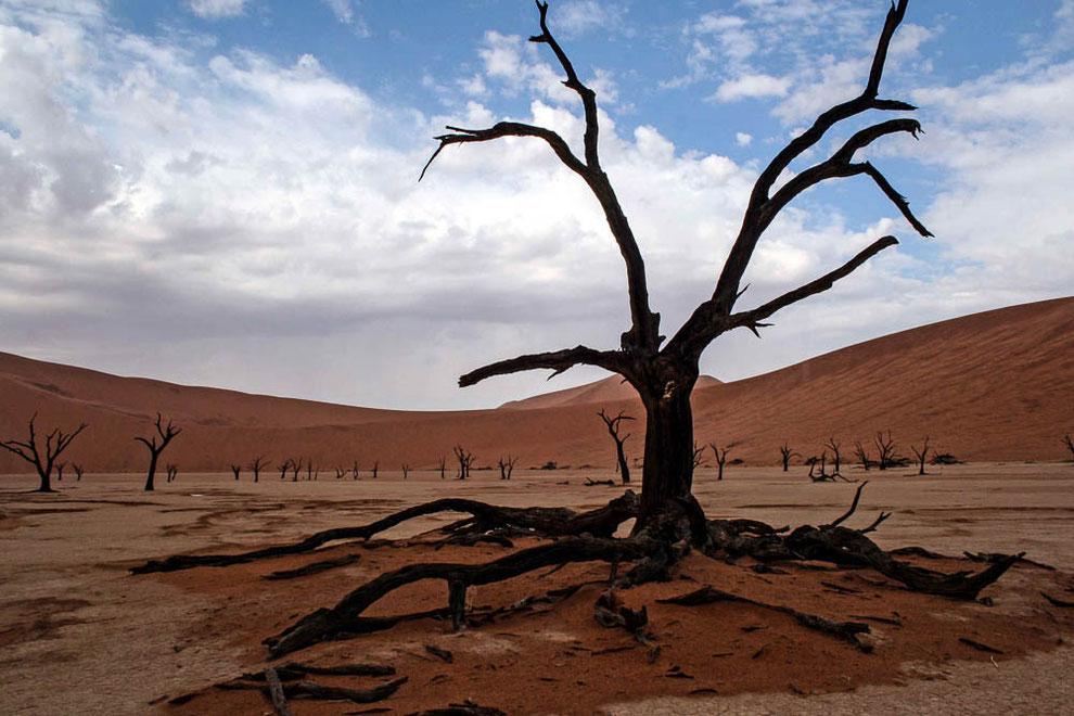 500 Jahre alte, vertrocknete Kameldornbäume im Deadvlei