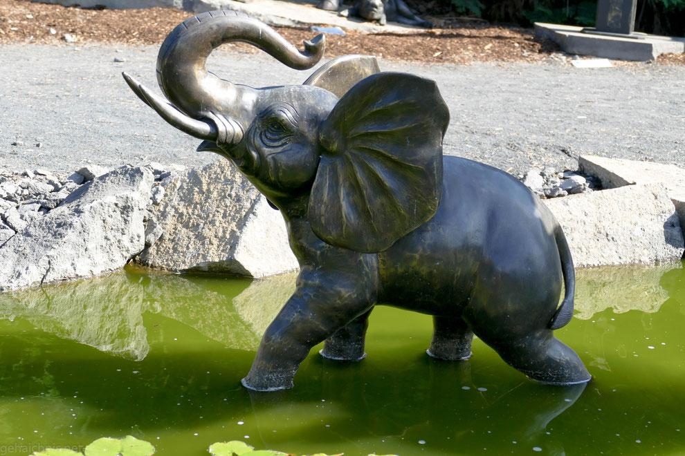 Ist doch klar, dass der Elefant mein Herz im Sturm erobert hat!?