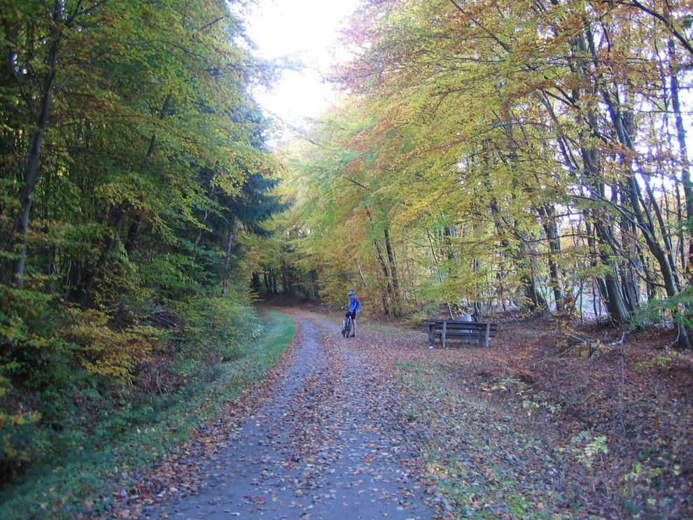 Schinderhannes-Radweg zwischen Hasselbach und Beller Bahnhof
