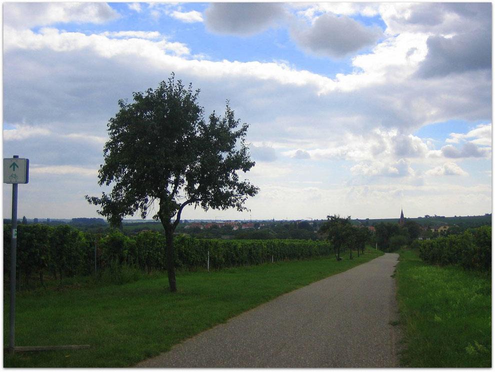 Kurz vor Forst, Deutsche Weinstrasse