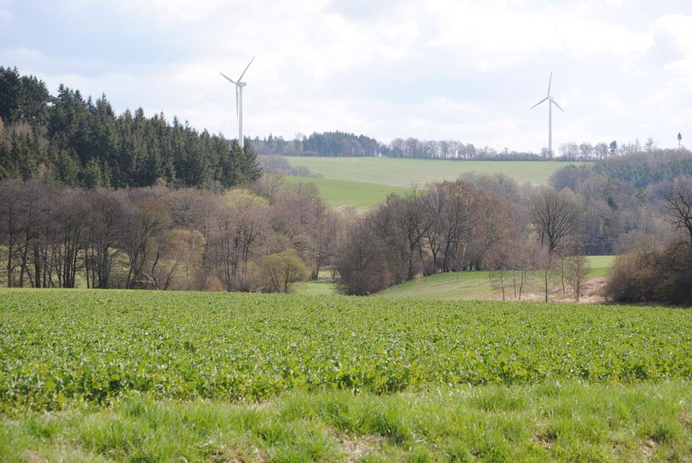 Kyrbachtal/Hunsrück