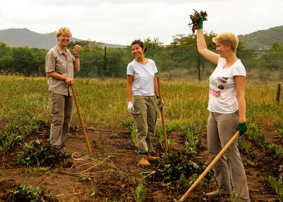 Gemeinsam packen wir alle mit an und helfen den 'Mamas' vor Ort, Spinat zu ernten.