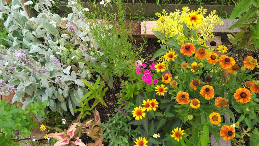 写真:羽賀造園の花たち