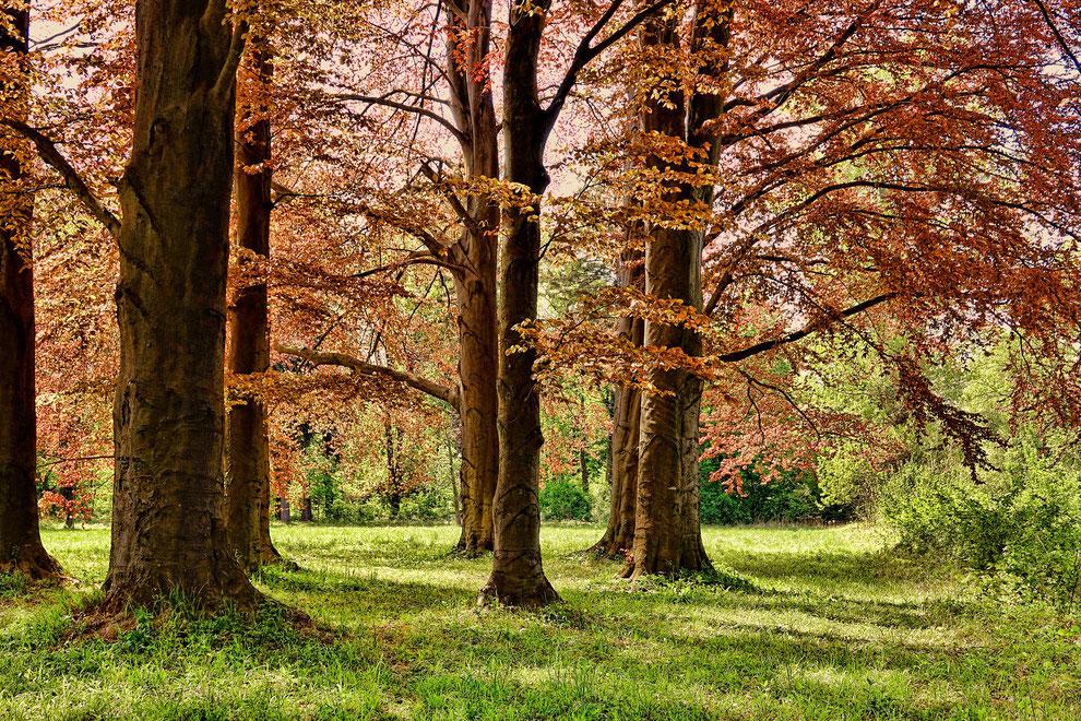 Natur Baum Echholz Holz