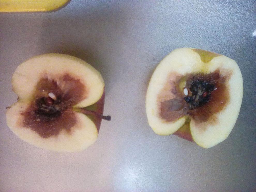 リンゴ真っ黒