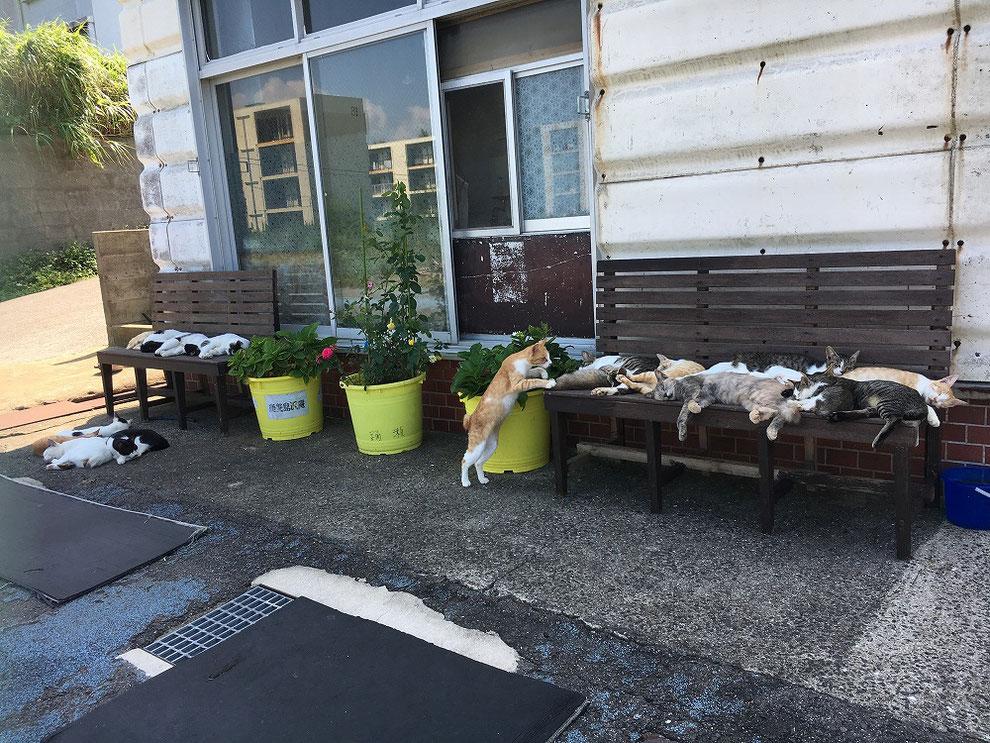 池島のかあちゃんの店の前の猫たち