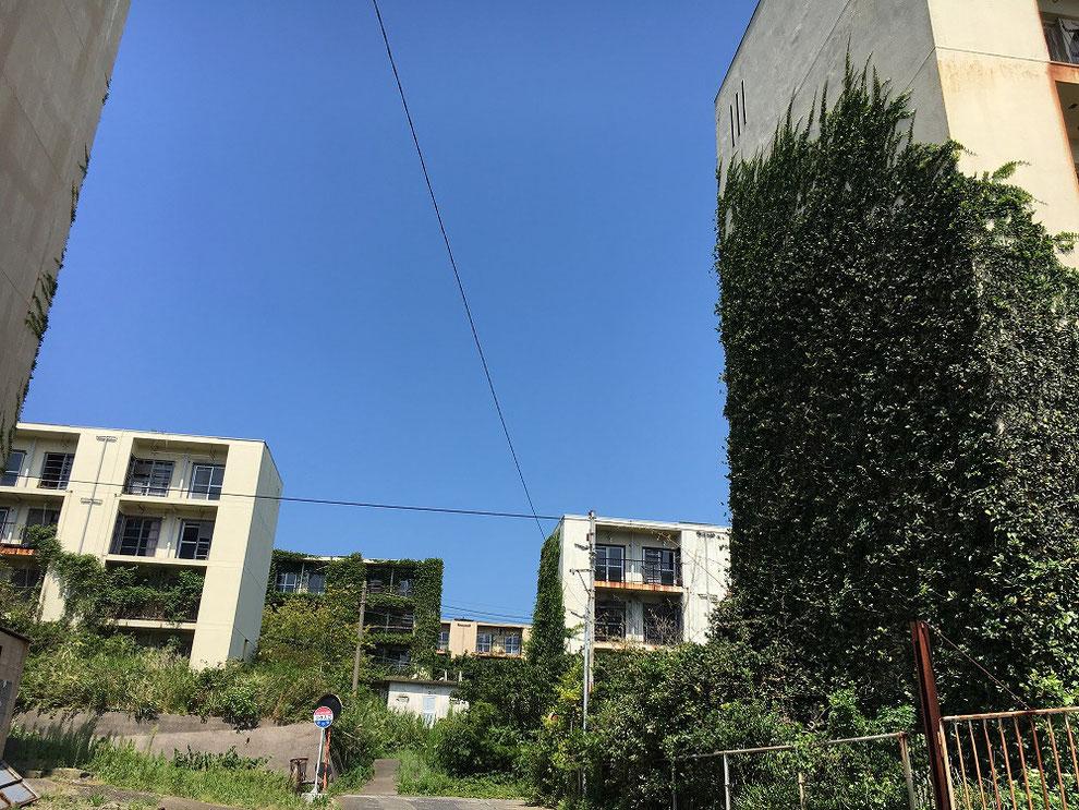 池島の蔦だらけの公営住宅