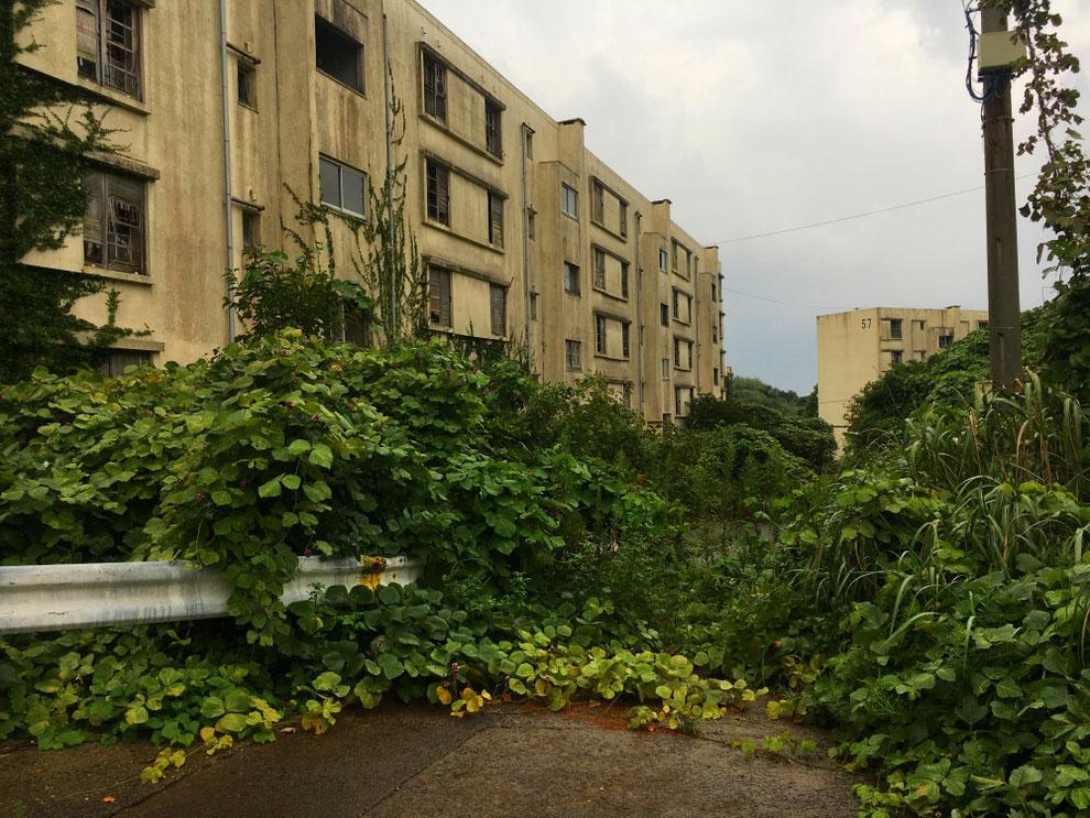 池島のアパート群の写真その2