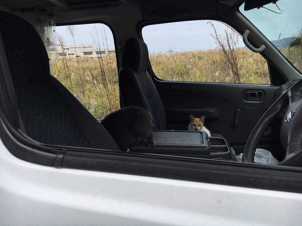 池島で猫に占領された車