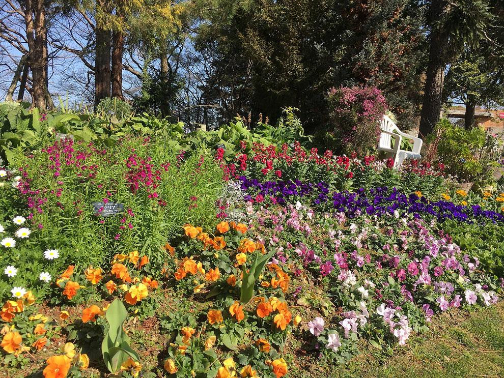 福岡市植物園 花壇その2