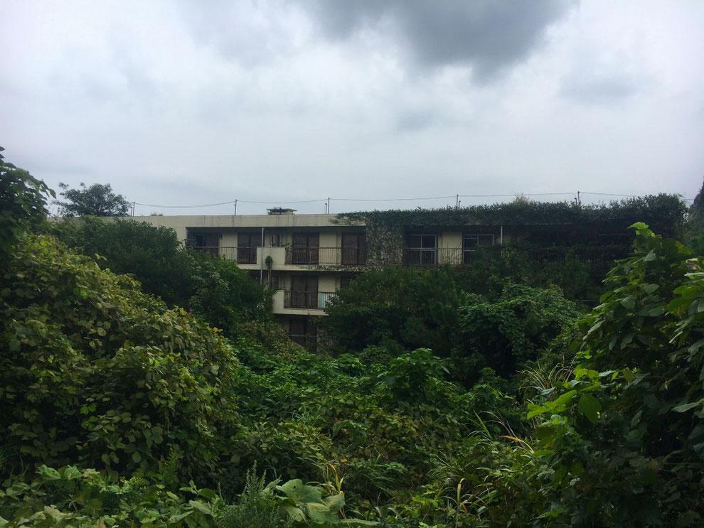 池島の草に覆われたアパート