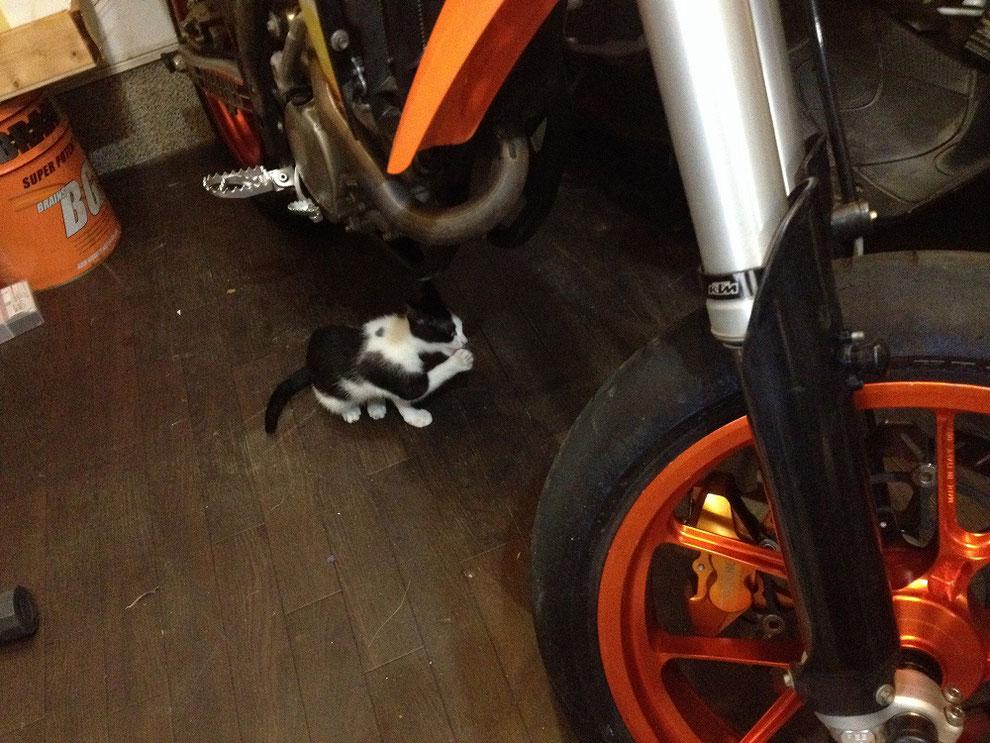福岡南本店の猫の民