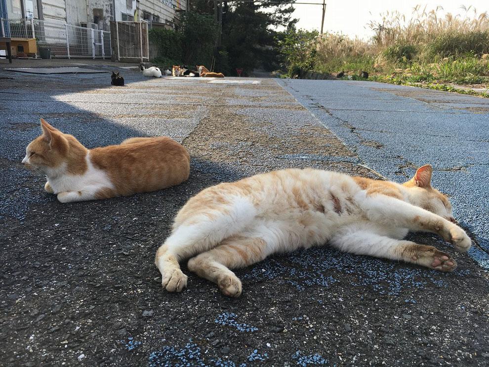 池島で道路に寝転ぶ猫