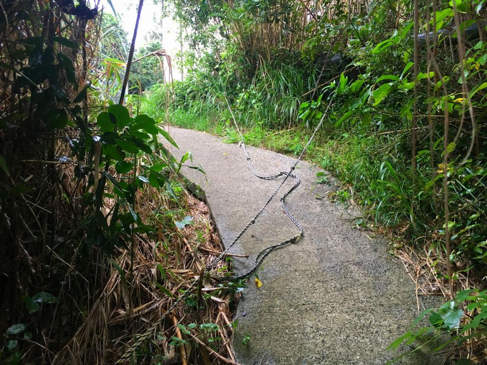 池島の四方山への道のロープ