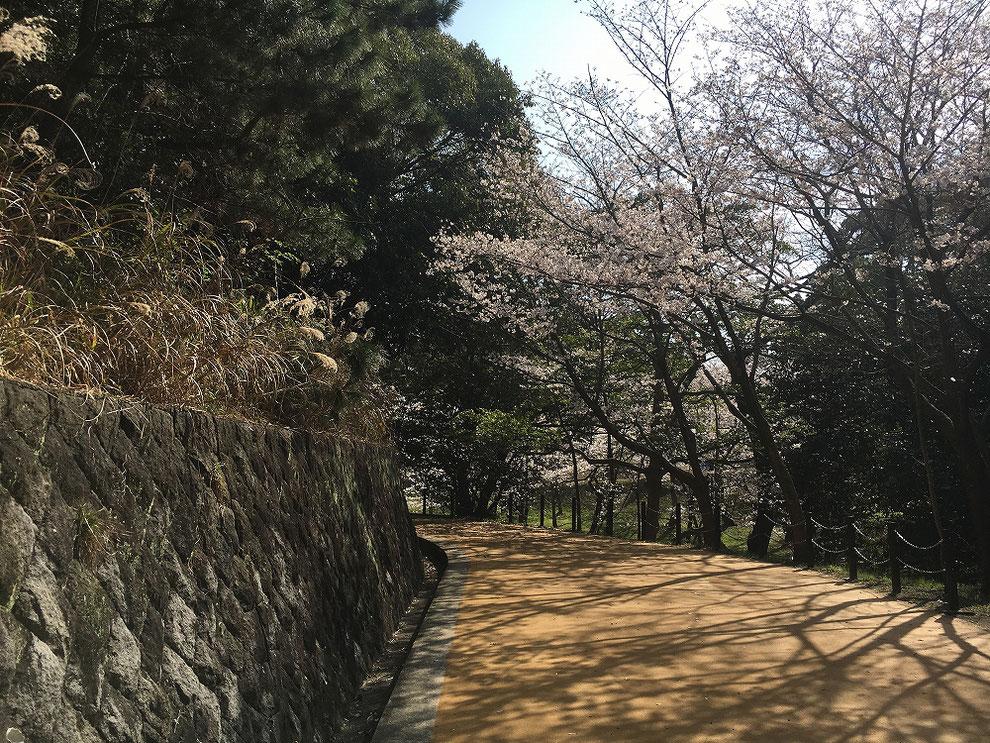 西公園の桜その2