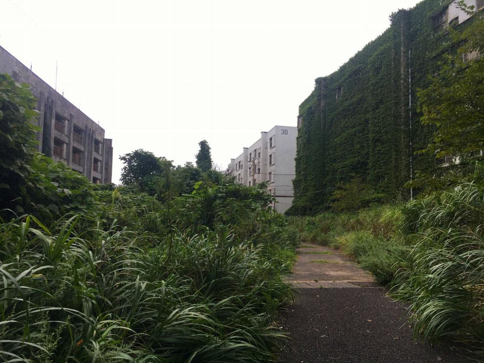 池島の草に完全に覆われたアパート
