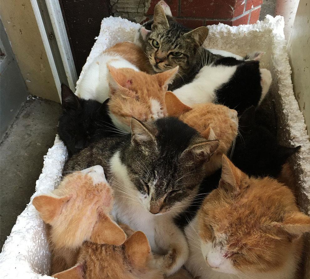 寒くてかたまっている池島の猫たち