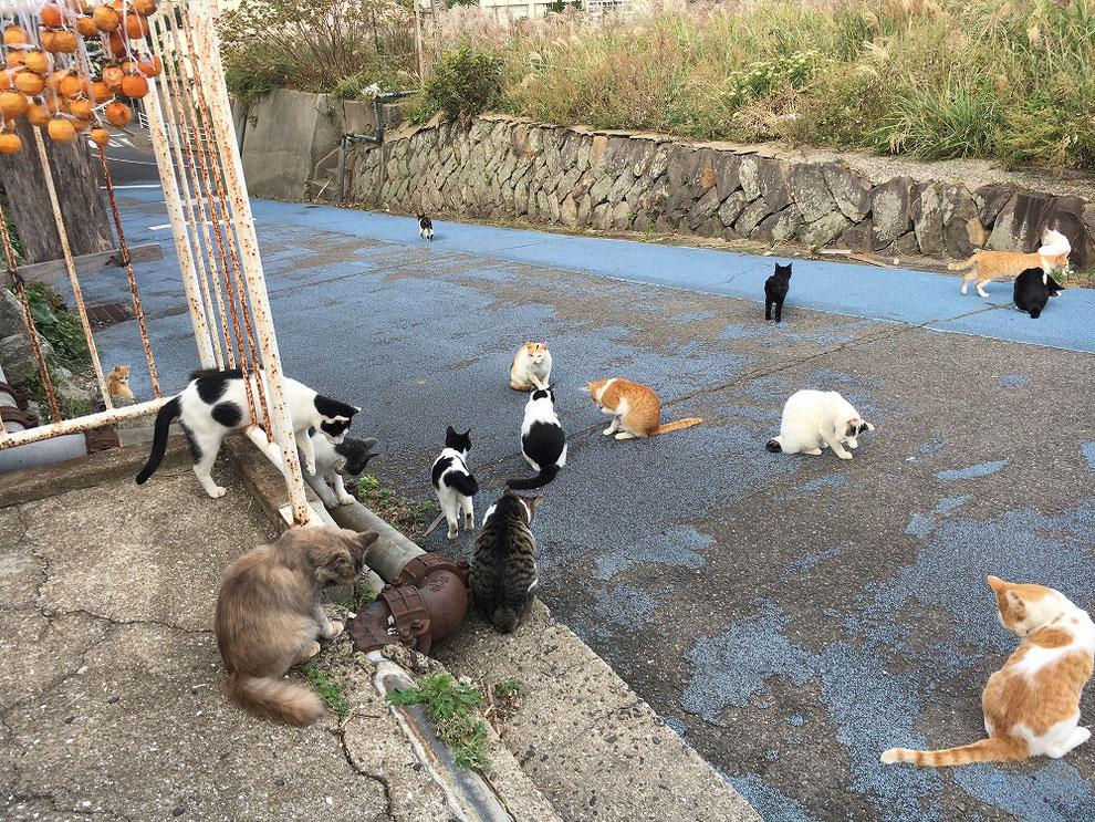 池島の猫たち