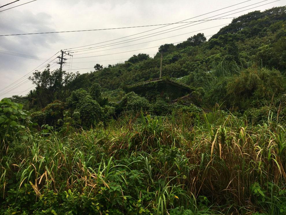 池島の草に覆われた家