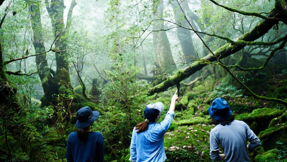 苔むす森(もののけ姫の森)をカップルで眺める(白谷雲水峡・太鼓岩ガイドツアー)